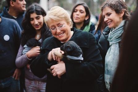 presidenta-bachelet-anuncia-programa-de-esterilizacion-masiva-y-gratuita-de-animales-domesticos-en-chile 02